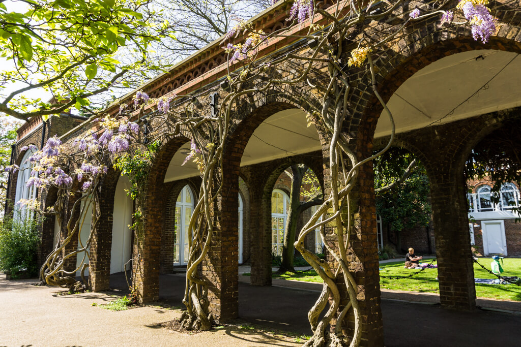 Where to See Wisteria in London in Spring? Follow this Colourful & Fragant Walking Route through West London. || The Travel Tester