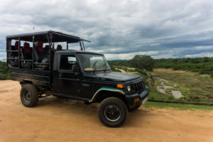 What You Need to Know About The Yala National Park Safari || The Travel Tester || #SriLanka #Asia #Travel #Yala #YalaNationalPark #Cinnamon #Hotel #Safari